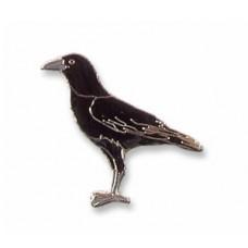 Crow, Northwestern pin