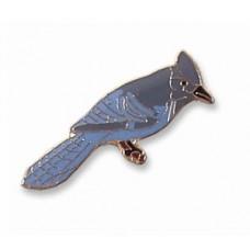 Jay, Steller's pin